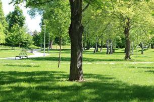 Stromovka: srdeční záležitost mnoha Pražanů – co byste o ní měli vědět?