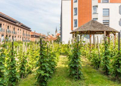 Albertov Rental Apartments - Vinice