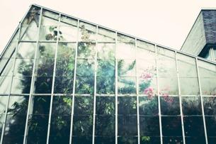 Džungle, která nespí: romantické noční procházky tropickým skleníkem Fata Morgana