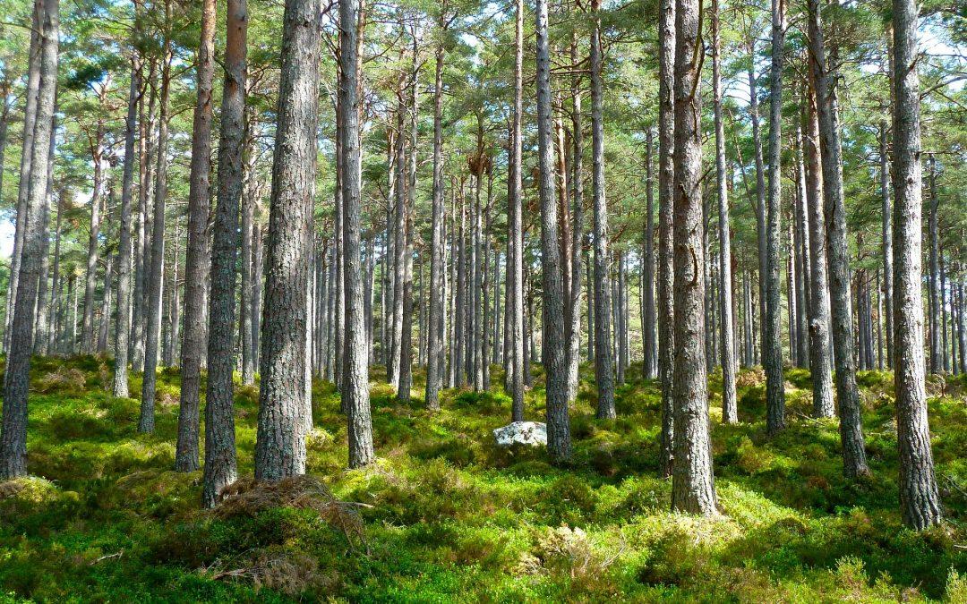 Naučná stezka Klánovickým lesem vás provede historií obce i zdejší přírodou