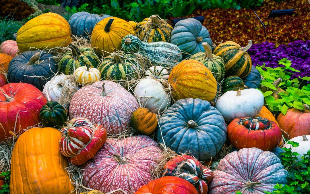 Dýňový podzim v trojské Botanické zahradě: zažijte venkov v Praze!